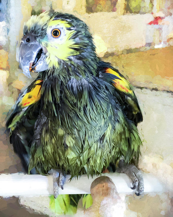 Wet Bird by Jennifer Grossnickle