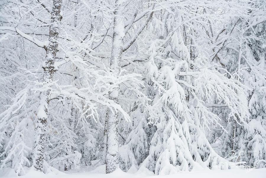 Wet Snow Photograph