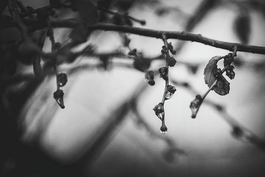 Water Photograph - Wet Twigs by Kamie Stephen