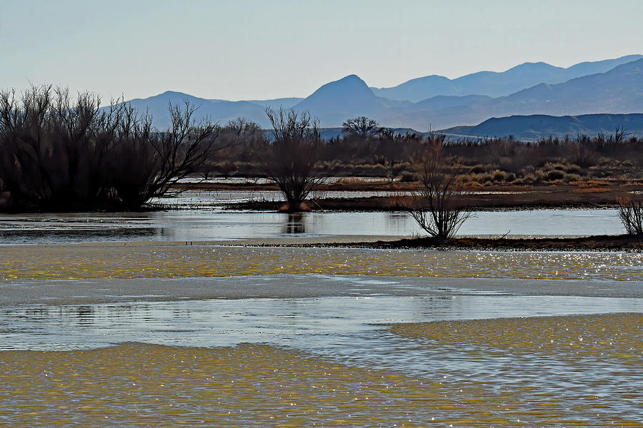 Wetland Currents Photograph
