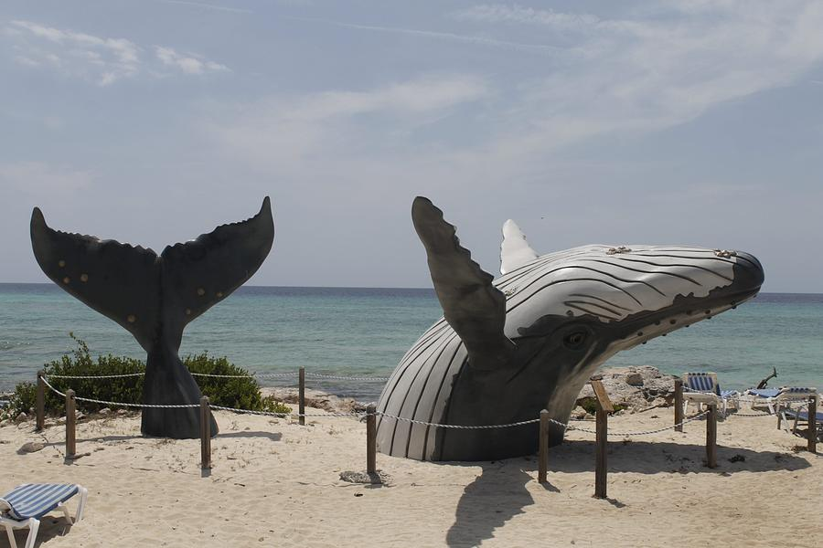 Whale Of A Time Photograph