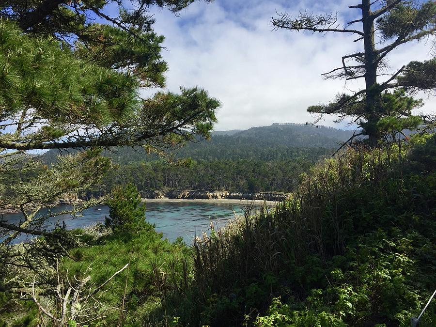 Whalers Cove In The Spring Photograph