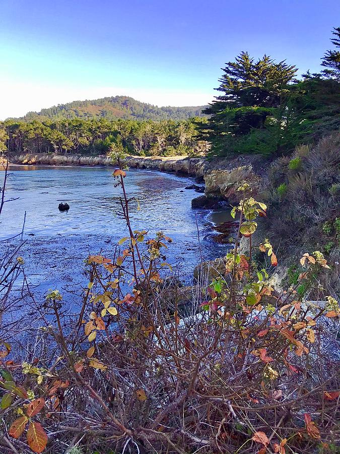 Whalers Cove Point Lobos Photograph