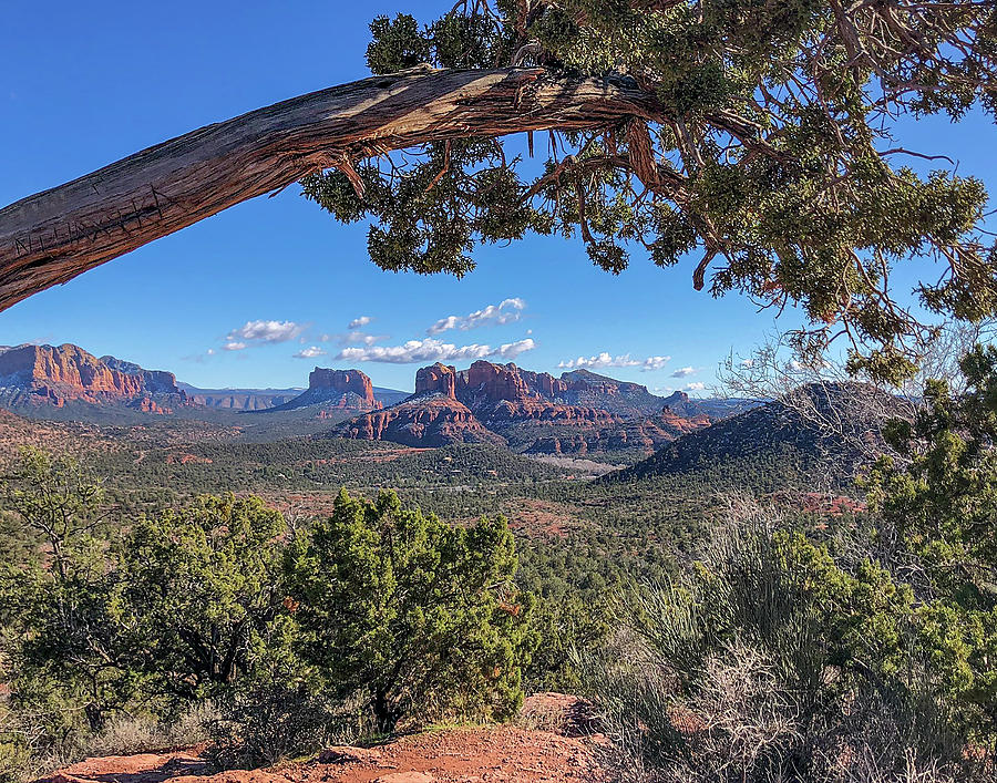 What a View Cathedral Rock - Sedona, Arizona by TL Wilson Photography by Teresa Wilson