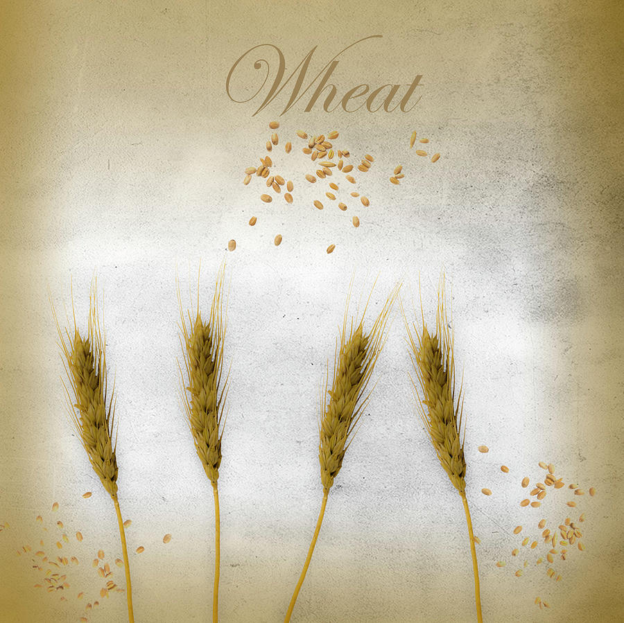 Wheat by Johanna Hurmerinta
