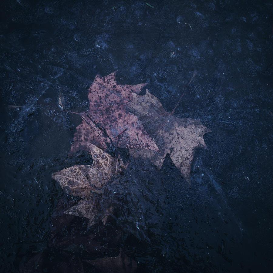 Winter Photograph - When winter comes by Dalibor Hanzal