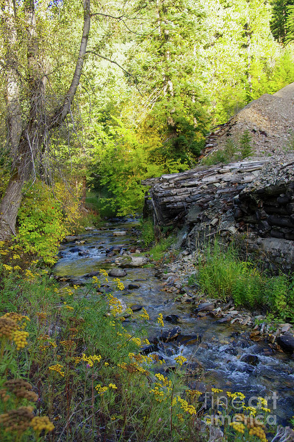 Creek Photograph - Where The Small Creek Bends by Jeff Swan