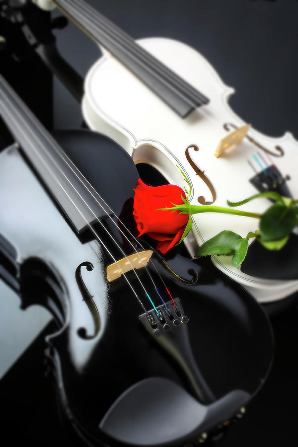 White And Black Violin With Red Rose by Garry Gay