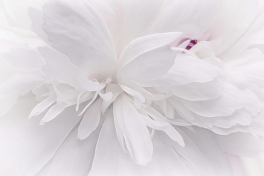 White Ballet Slippers update by Darlene Kwiatkowski