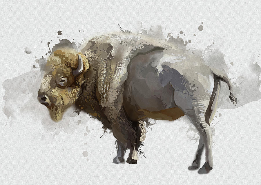 White Buffalo Watercolor Digital Art