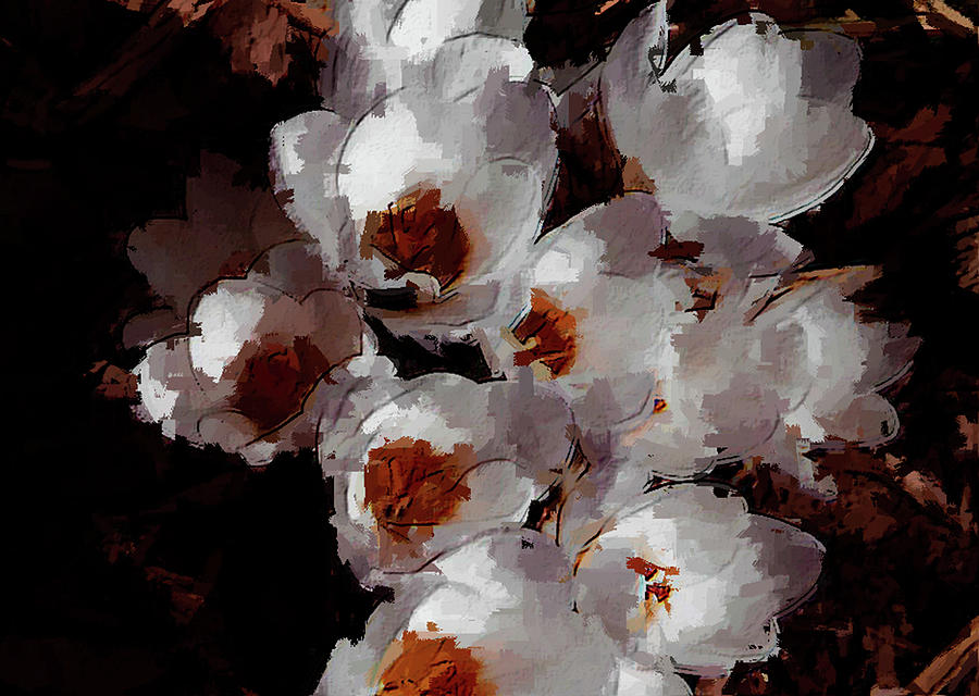 Abstract Photograph - White Crocus by David Beard