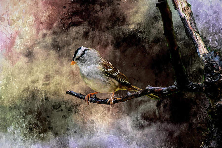 White Crowned Sparrow In A Storm Artistic 1 by Linda Brody