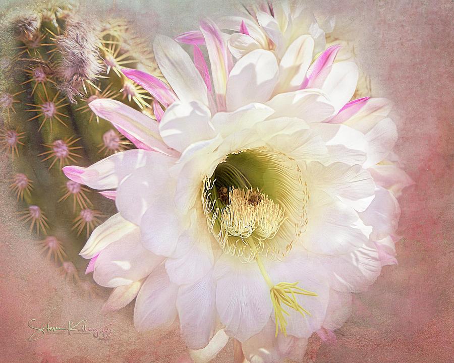 White Desert Bloom of Tucson by Steve Kelley