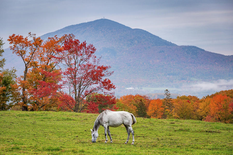 White Horse in Fall by Tim Kirchoff