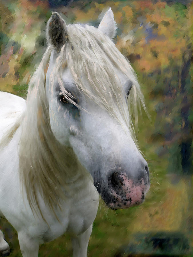 White Horse by Portraits By NC