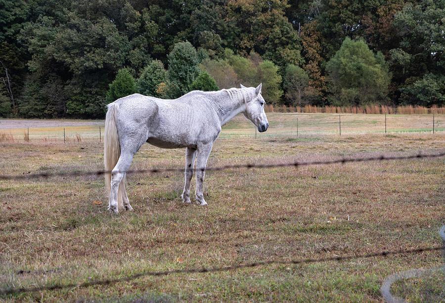 White Horse by Teresa Blanton
