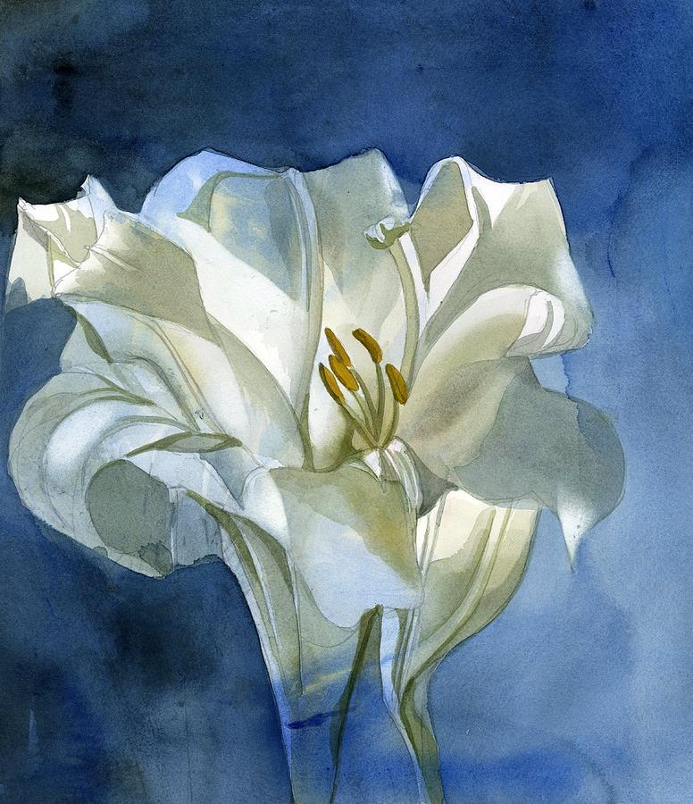 white lily in blue by Alfred Ng