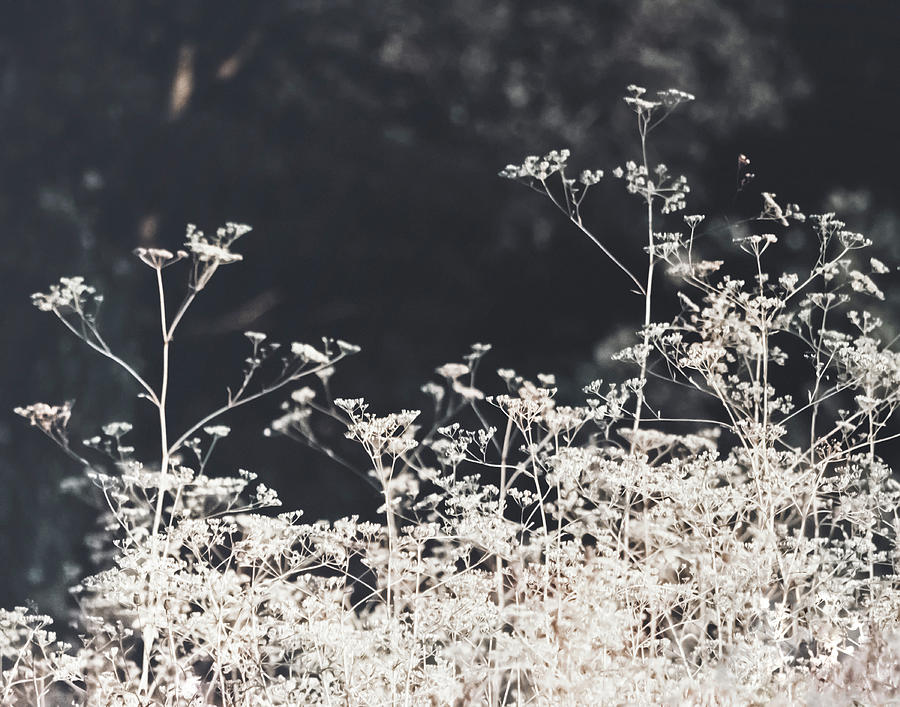 White On Black Photograph