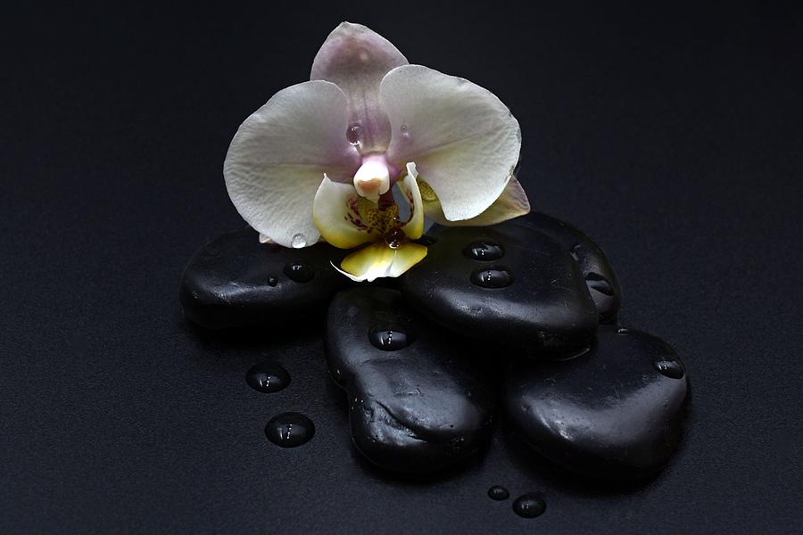 White Orchid On Black Stones Photograph
