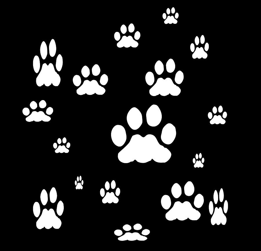 White Pet Paw Prints by Kathy K McClellan
