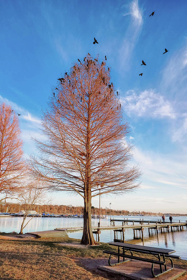 White Rock Lake Tree 011420 by Rospotte Photography