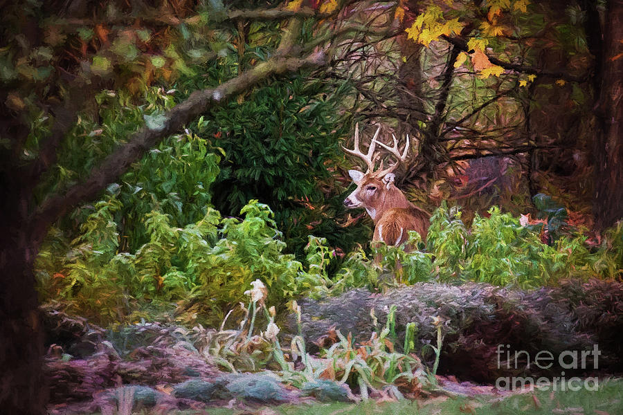 White Tailed Buck In The Garden by Sharon McConnell