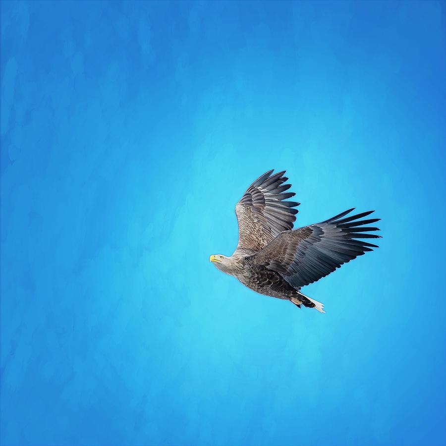 White Tailed Eagle Hokkaido Japan Photograph