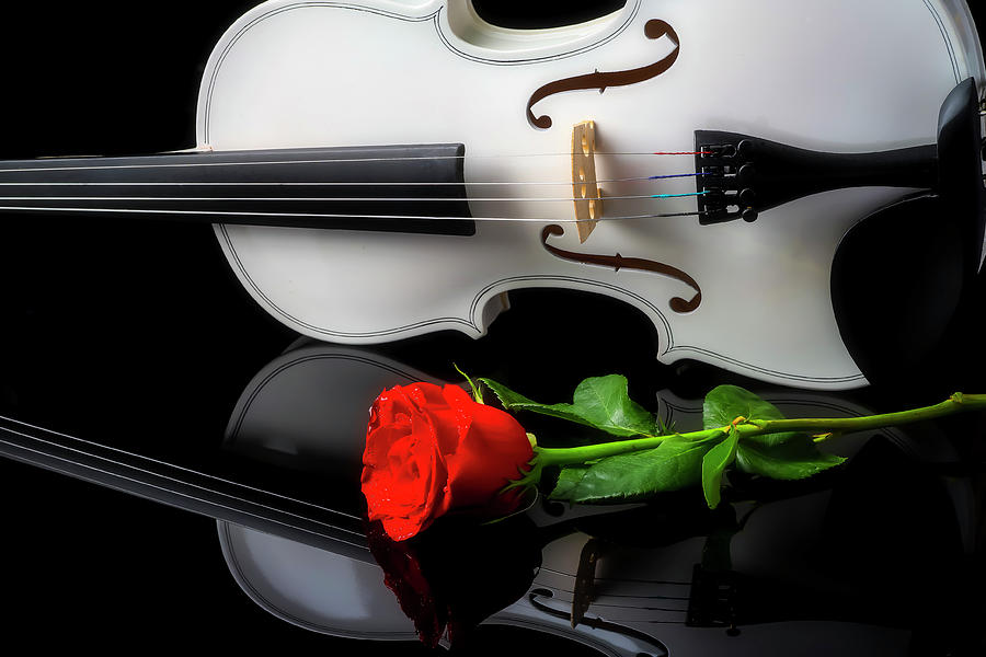 White Violin Reflection With Rose by Garry Gay