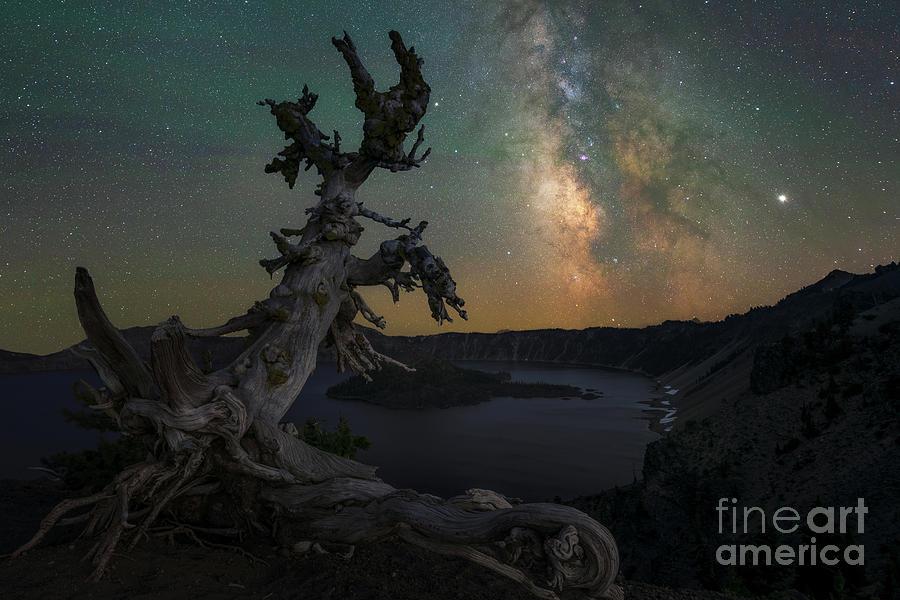 Whitebark Pine Under The Stars by Michael Ver Sprill