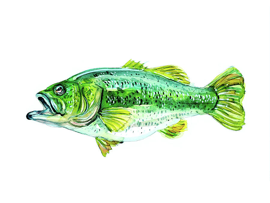 Large Mouth Bass Painting