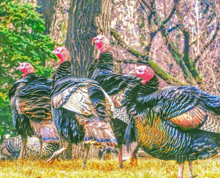 Wild and Whacky Turkeys by Curtis Tilleraas