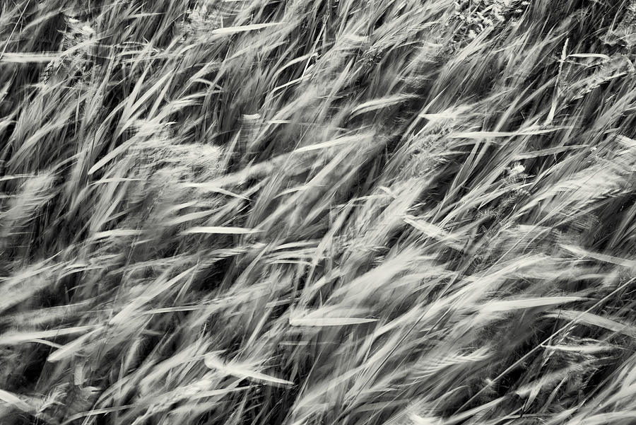 Wild Hay Storm by John Williams