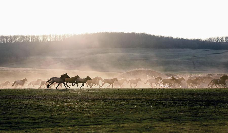 Wild Horse run in Sunset by John Williams
