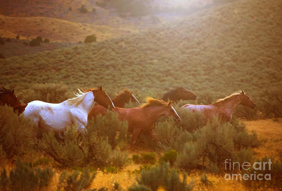 Wild Horses Running at Sunset by Diane Diederich