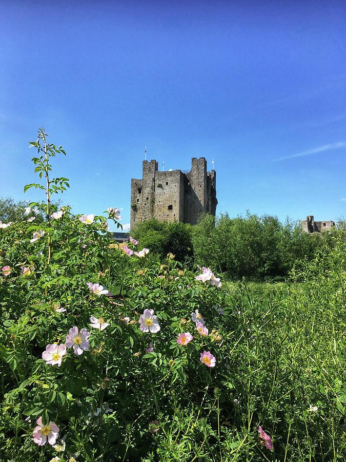 Wild Irish Rose Photograph