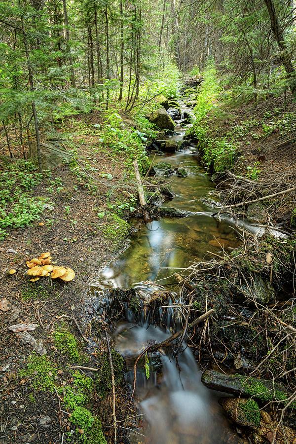 Wild Mushrooms Along The Creek Photograph