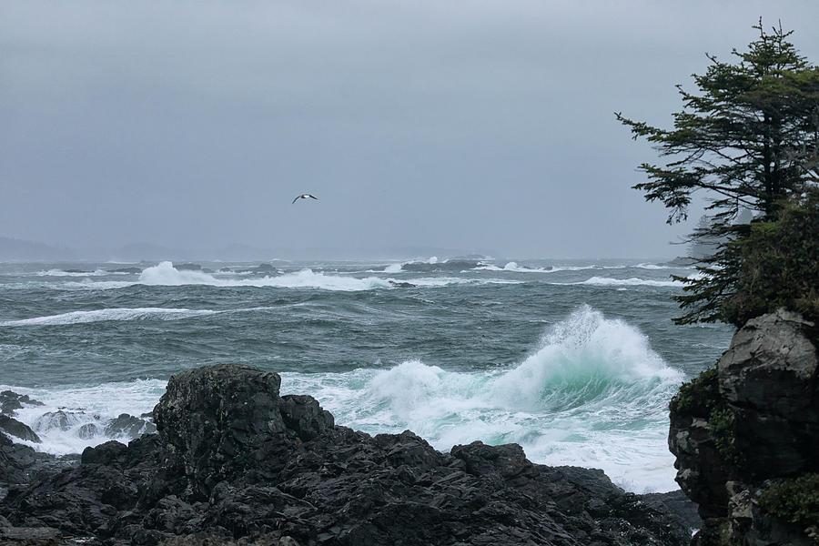 Wild Pacific Photograph