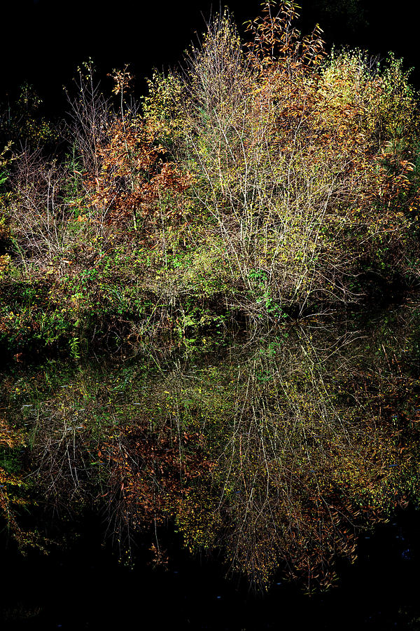 Ancient Photograph - Wild reflections upon the canal surface by Nick Lewis