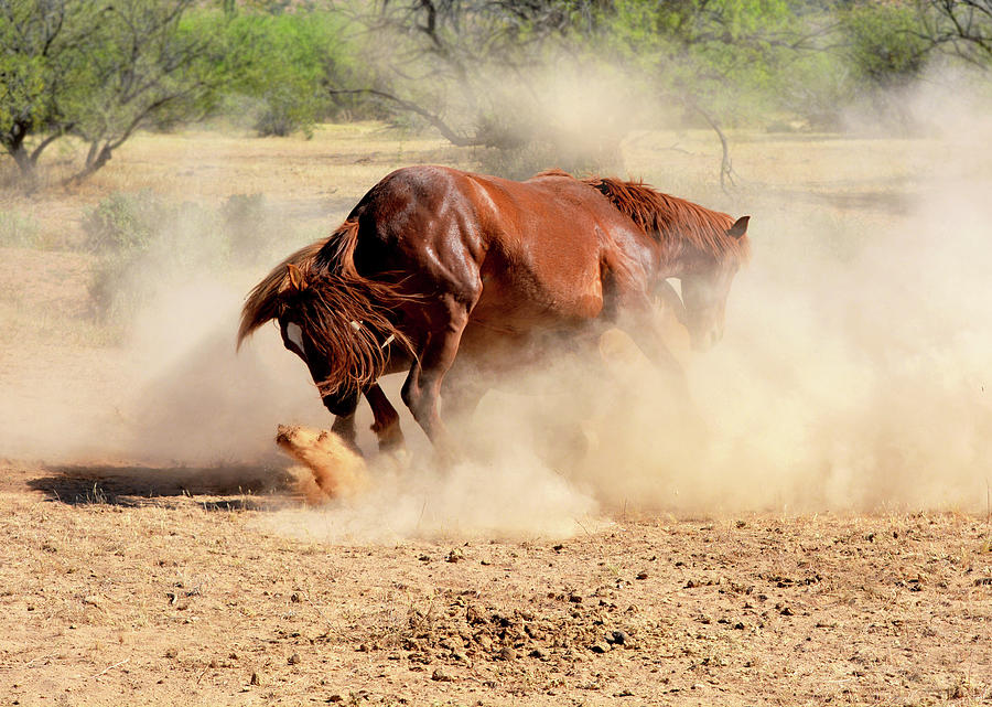 Wild Stallion's Dust Storm by Barbara Sophia Travels