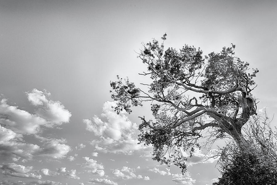 Wild Tree of Memory by John Williams