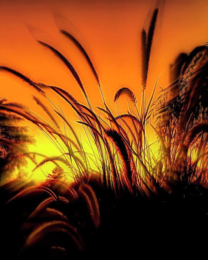 Wild Weeds Of Summer Photograph