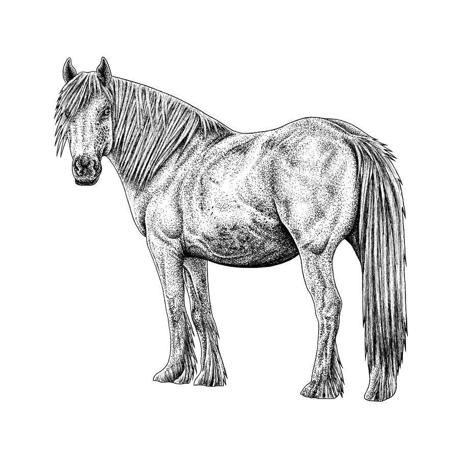 Wild white horse ink illustration by Loren Dowding