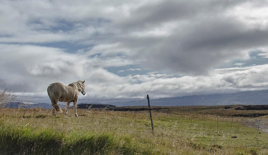 Horse Photograph - Wildfire by Jim Cook