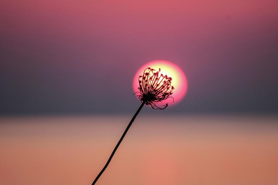 Wildflower Photograph - Wildflower at sunrise  by Leigh Henningham