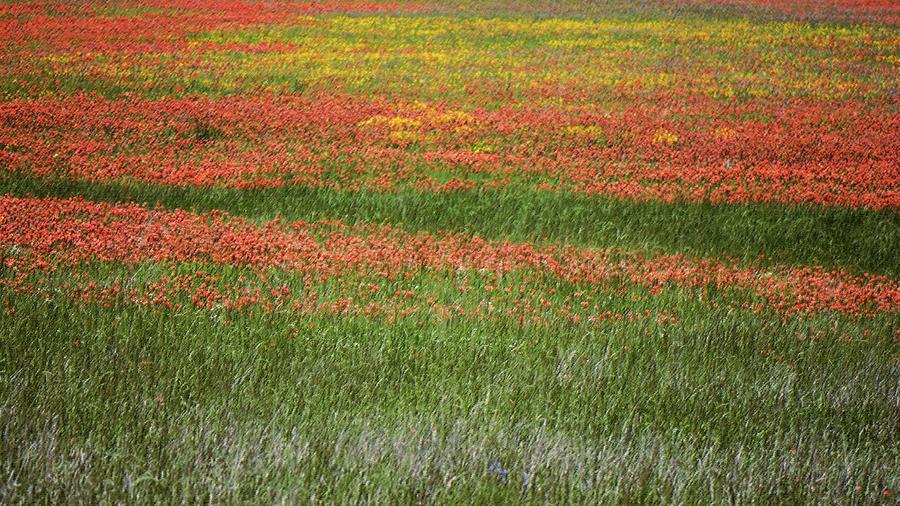 Wildflower Field. Chappell Hill Texas Photograph