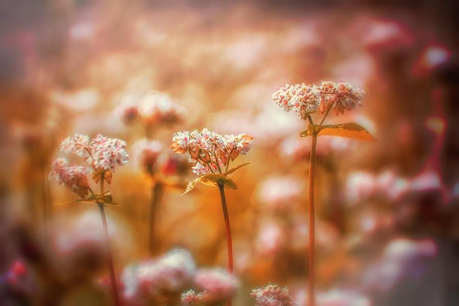 Wildflower Photograph - Wildflower Warmth by Jim Love