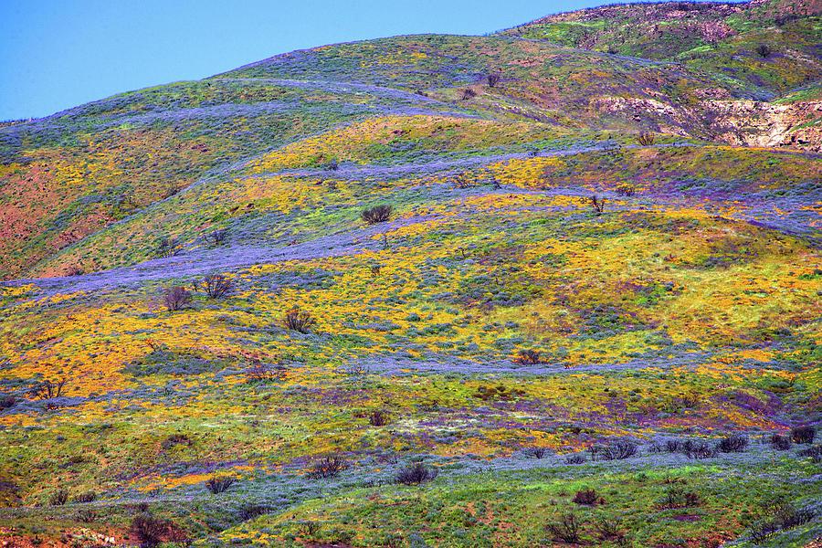 Wildflowers Carpet the Malibu Hills by Lynn Bauer