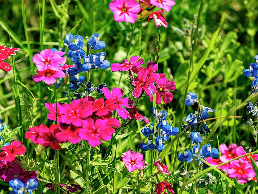 Wildflowers Photograph