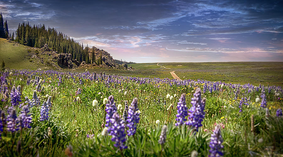 Wildflowers of the Big Horns Photograph by Laura Terriere