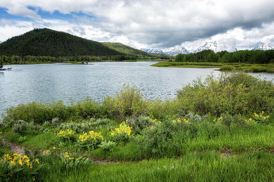Wildflowers On The Shore Of The Snake River In Grand Tetons Np Photograph